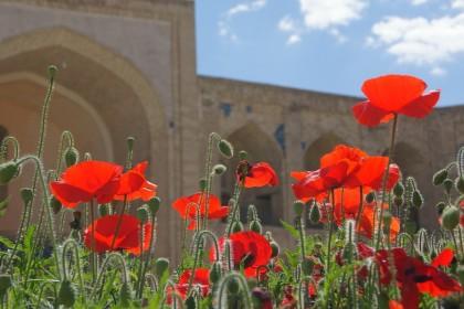 Spring tour in Uzbekistan