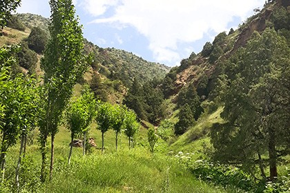 Zaamin Reserve