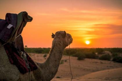 Караваны Пустыни (сафари на верблюдах) - Тур из Москвы (Комфорт)